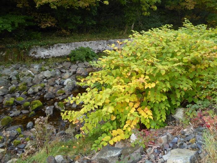 J.K. - Riverside plant in autumn