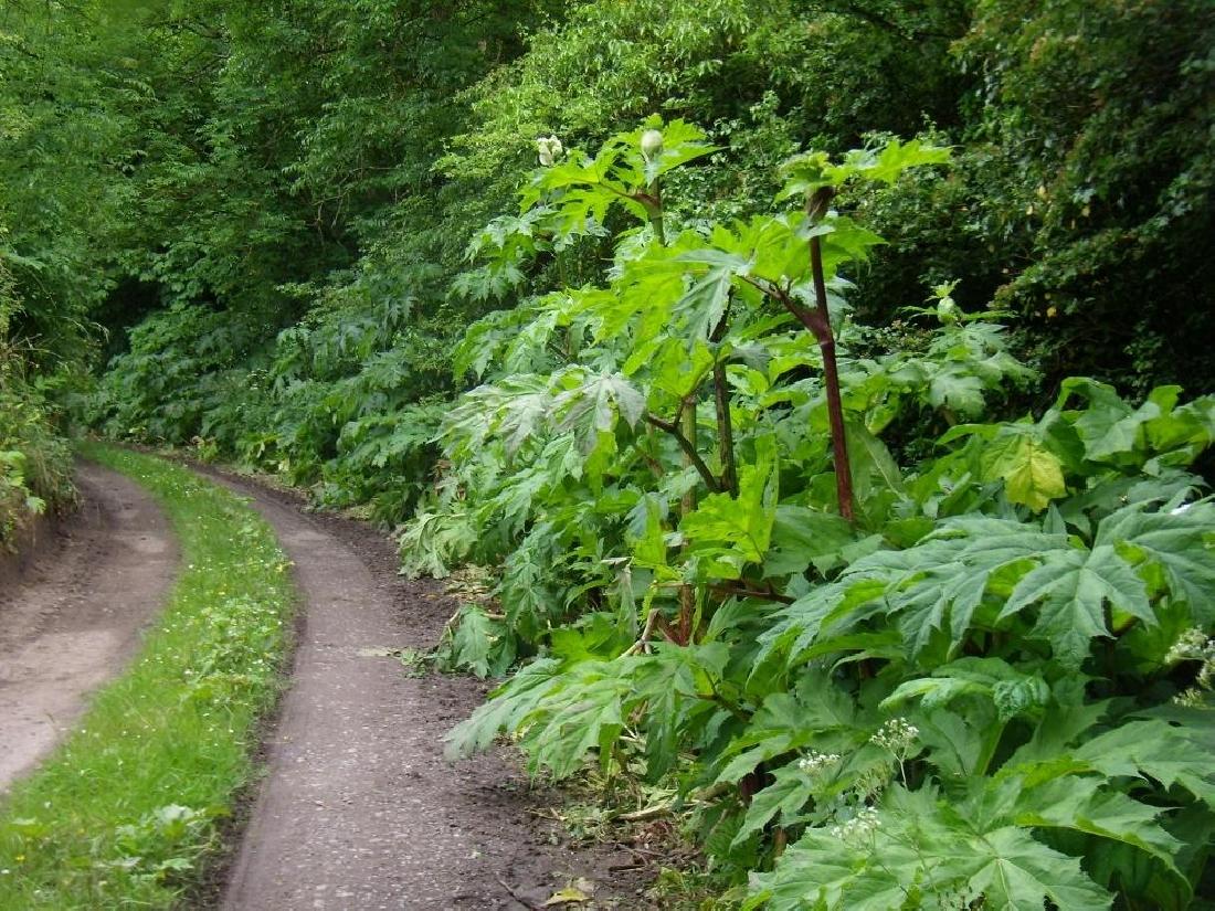 G.H. - Plants along a country lane