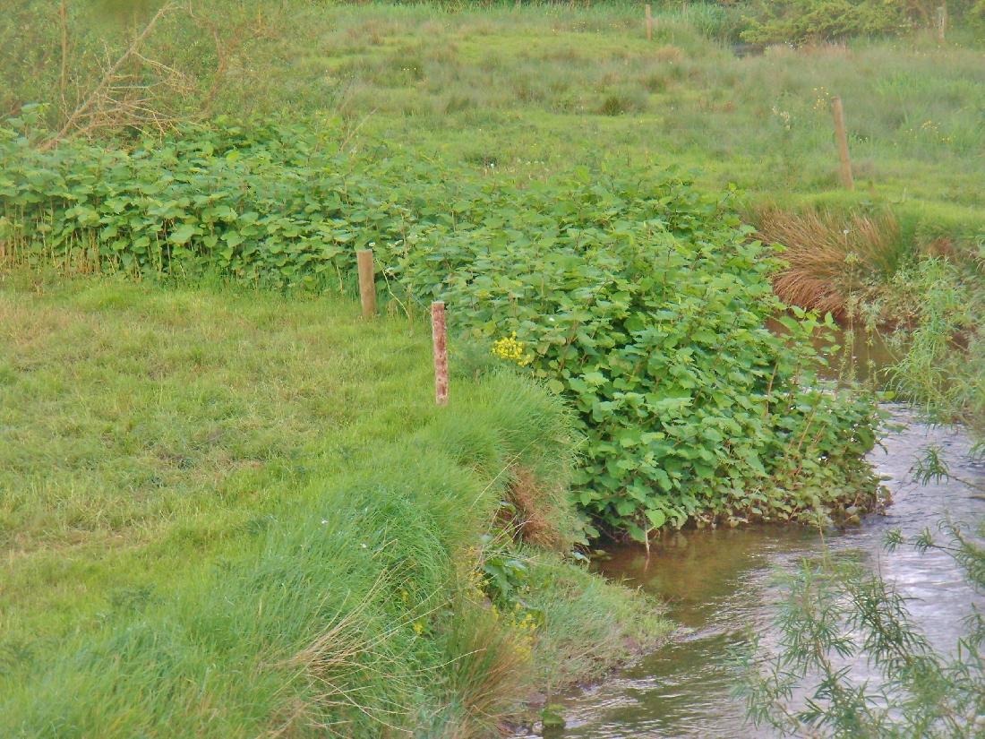 J.K. - Plants on vulnerable riverbank