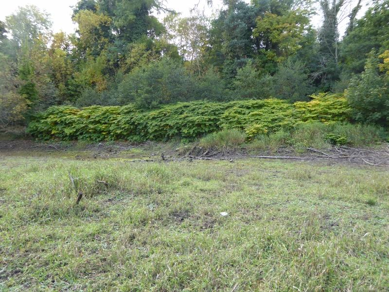J.K. - infestation on woodland fringe