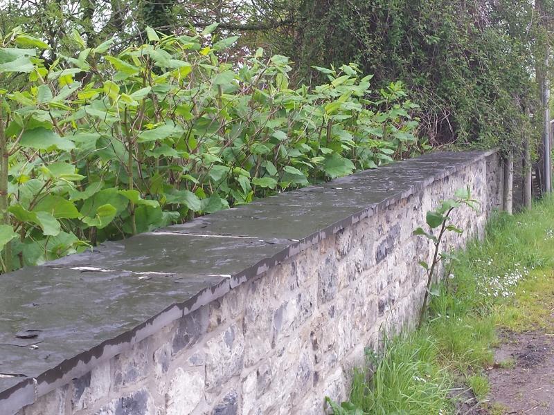 J.K. - Spreading through stone wall