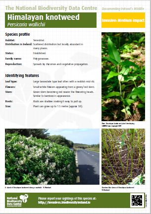 Media Library - Cover - ID sheet for Himalayan Knotweed